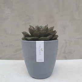 Gray Melamine small w succulent.jpg