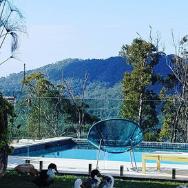 View over the communal pool at Gold Coast Hinterland tree houses.jpg