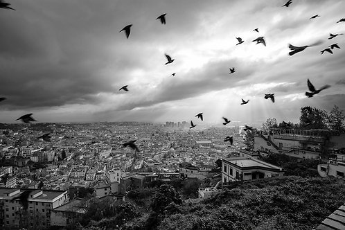 Naples, San Martino. Birds