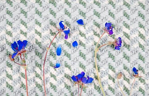 blau (2 von 2).jpg