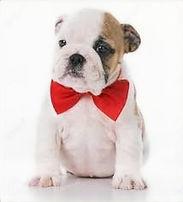 puppy bow tie_edited.jpg