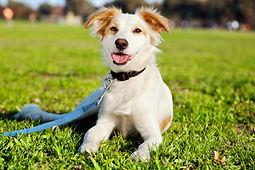 happy-dog-grass.jpg