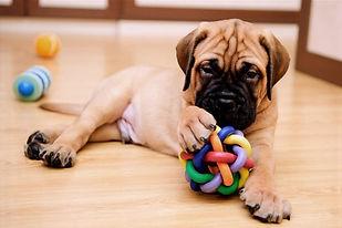 mastiff toys_edited.jpg