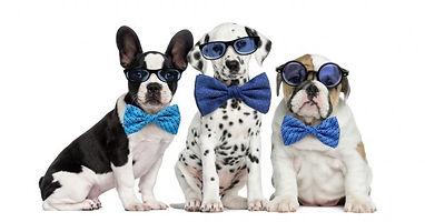 dogs wearing glasses.jpg