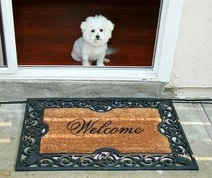 dog-at-door_edited_edited.jpg