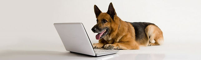 laptop-dog-1024x307.jpg
