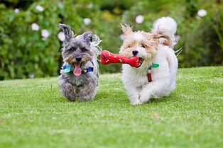 puppy play_edited.jpg