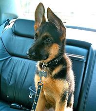 puppy car_edited.jpg
