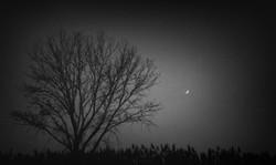 moontree3