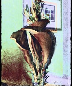 calla lilys