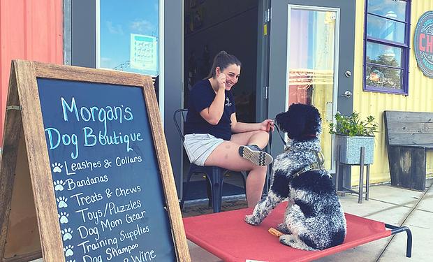 Teaching Your pup to meet strangers poli