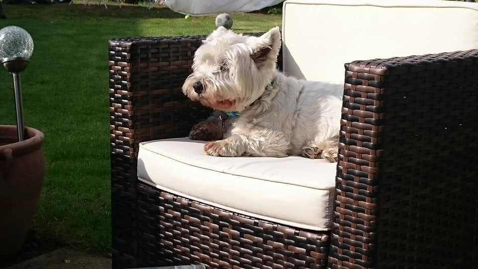 Dog resting in the sun