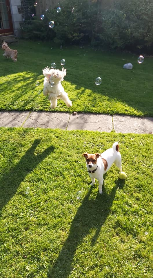 Dogs playing with bubbles