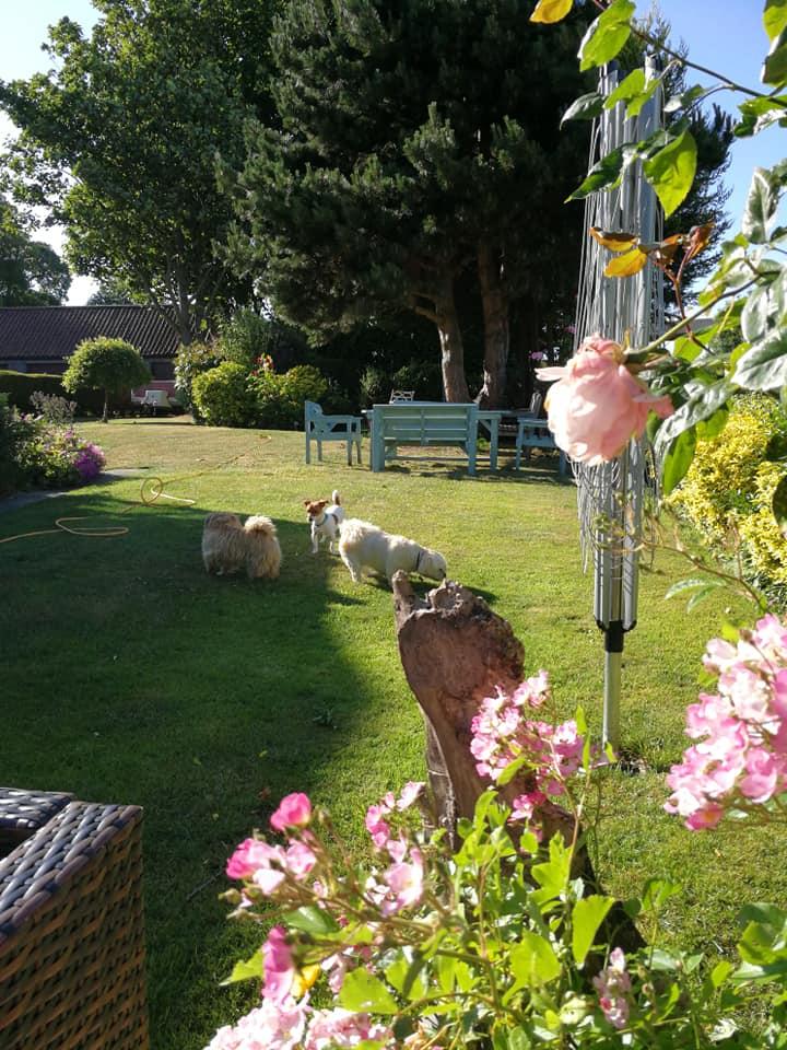 Boarders playing in garden
