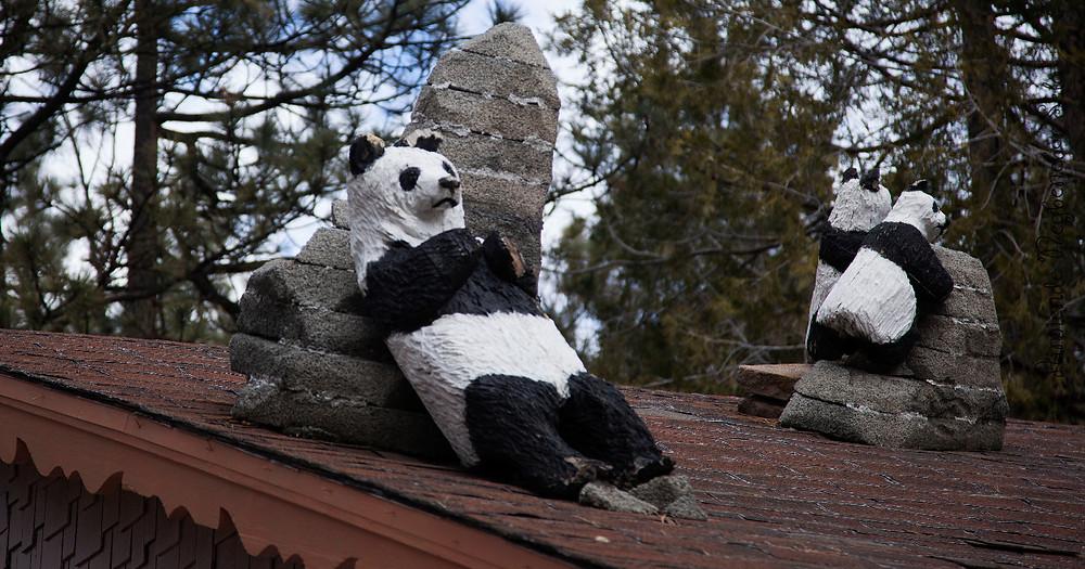 Bears on a roof