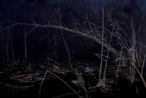 Swamp at night