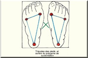 polygone, posture et ostéopathie