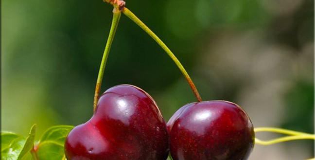 Esencia de Cherry