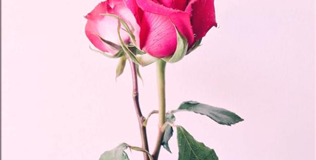 Esencia de Rosa Fina