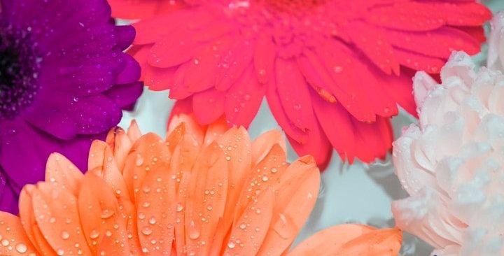 Esencia de Mil Flores