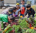 School Garden Partnerships.jpeg