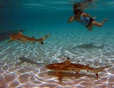 swim-with-sharks-island-of-moorea