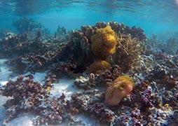 snorkel-coral-garden-moorea-lagoon
