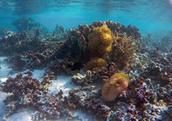 Jardin-de-corail-lagon-moorea