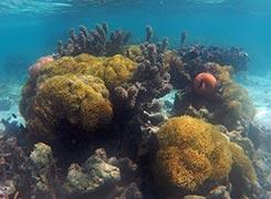 coral-garden-of-moorea