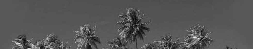 background-coconut-tree-moorea