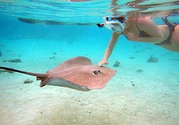 swim-with-stingrays-moorea