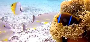 snorkeling-tour-moorea-lagoon