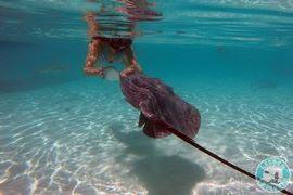 Nager-avec-les-raies-Polynesie