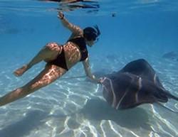 nager-avec-les-raies-à-moorea