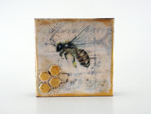 Honey Bee (1) / Shannon Amidon
