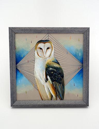 Blue Owl / Jasmine Co