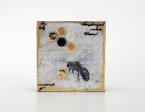 Honey Bee (3) / Shannon Amidon
