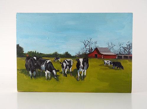 Holsteins and Robin / Caitlin Tibbs