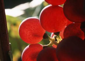 DOMAINE LOUIS SIPP ALSACE-Riesling Grand Cru Osterberg 2017 -Vin biologique.