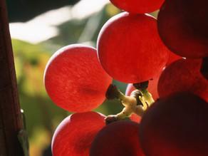 DOMAINE LOUIS SIPP ALSACE - Vin biologique.
