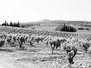 MAS PUJOL- 1785, millésime 2018. IGP Côtes Catalanes. Vin biologique.