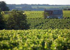 DOMAINE TERRES TURONES - Chenin 2017 - AOC Montlouis/Loire