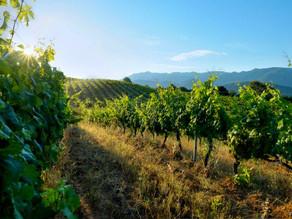 DOMAINE VACCELLI - AOC Ajaccio. Vin biologique.