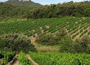 MAS SEREN- rouge Mintaka 2018               IGP Cévennes -Vin biologique.