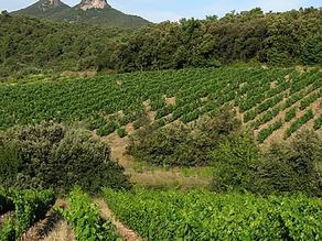 MAS SEREN- Cévennes -Vins biologiques.