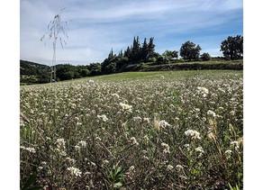 MAS DES QUERNES -Les Petits Travers 2019. AOC Languedoc.