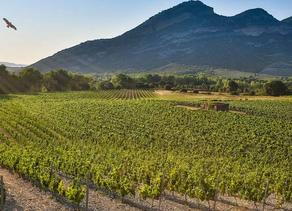 DOMAINE YVES LECCIA - YL blanc 2018, IGP Ile de Beauté. Vin biologique.