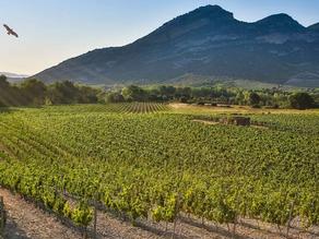 DOMAINE YVES LECCIA - AOP PATRIMONIO et IGP Ile de Beauté. Vins biologiques.