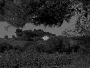 DOMAINE BOUDAU  - Le Clos 2020. AOP Côtes du Roussillon . Vin biologique.