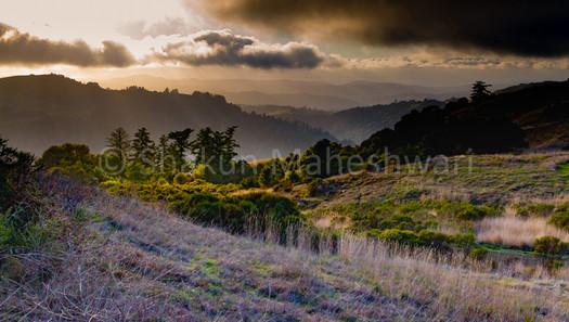 Hills of Purple